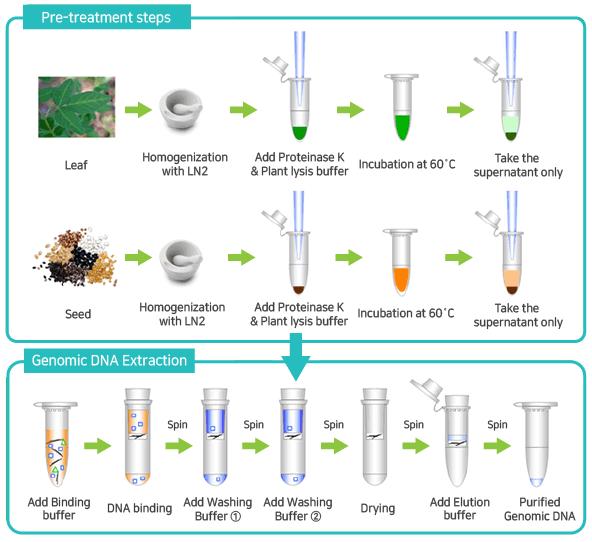 Genomic Binding Buffer: AccuPrep® Plant Genomic DNA Extraction Kit (100 Reactions
