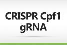 CRISPR-Cpf1 gRNA Service, CRISPR, gRNA