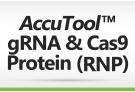 AccuTool™ gRNA & Cas9 protein (RNP)