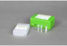 AccuPower® Babesia PCR Kit