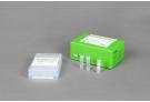 AccuPower® Babesia & Theileria PCR Kit