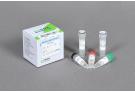 RocketScript™ Reverse Transcriptase , rtase, rt-pcr, polymerase, reverse transcriptase
