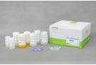 AccuPrep®PCR/GelPurificationKit (200 reactions)