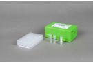 AccuPower® Rickettsiales 3-Plex PCR Kit