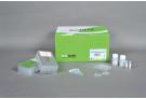 Rice Genomic DNA extraction Kit for ExiPrep™16, genomic DNA, extraction, prep, sample prep, DNA extraction, ExiPrep kit