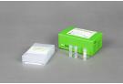 AccuPower® Theileria PCR Kit