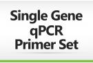 Single Gene qPCR Primer Set